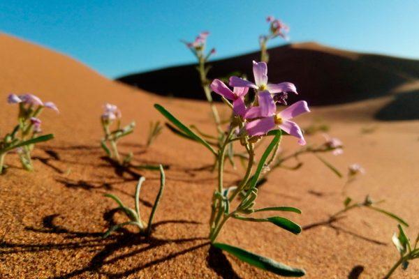 Erg-chigaga-Desert-Tour4