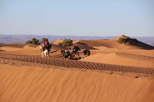 Sahara-Camel-Trek-on-3-days2