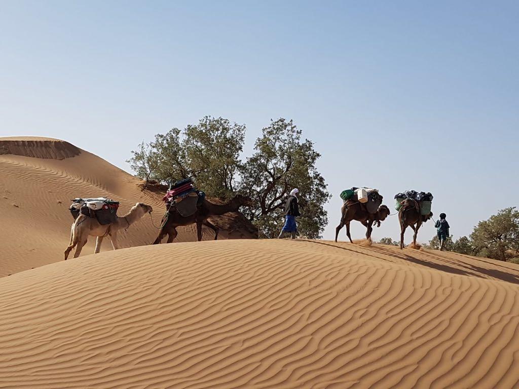 Discovery Sahara